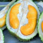 Harga Tiga Biji Durian RM937 Adalah Munasabah Di Pulau Pinang