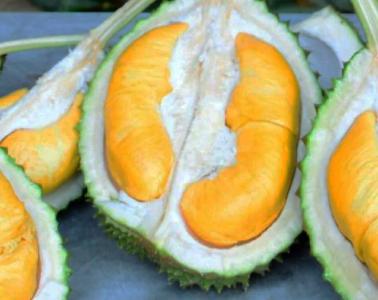 durian-musang-king-harga-mahal-murah-sedap-lazat-buahdurian-pokokdurian-durianmurah